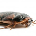Contact our South Lake cockroach control experts today!