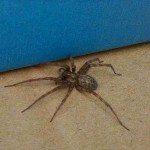 Contact our South Lake spider control experts today!
